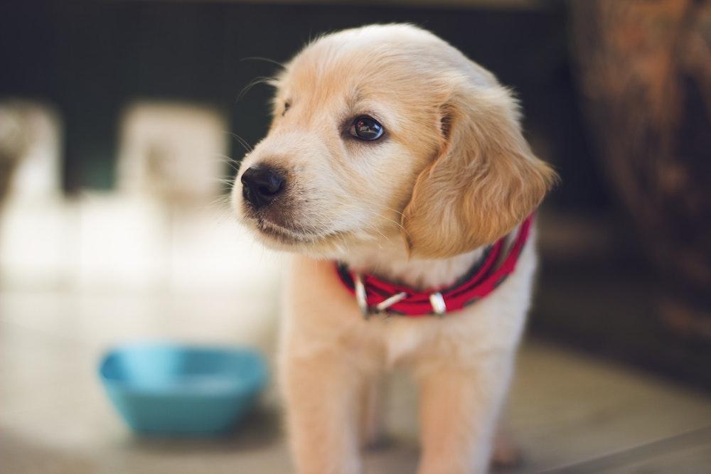 pet health insurance Solon OH